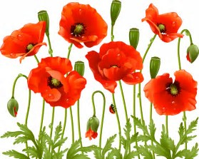 Image result for free clipart poppy clear background
